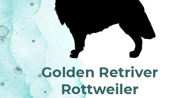 goldenretriver1