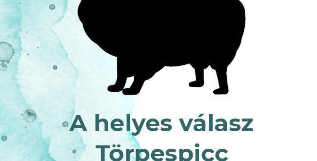 torpespicc2