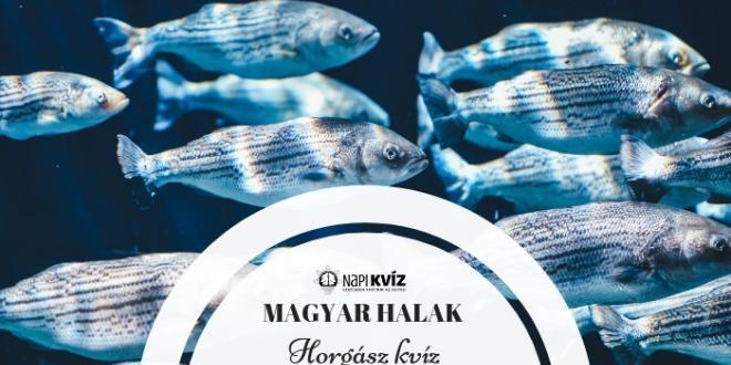 Magyar halak horgász kvíz