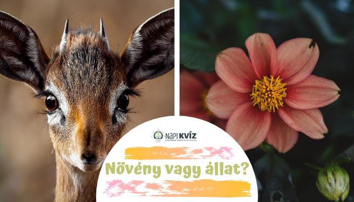 Növény vagy állat? kvíz