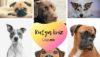 Kutyá származása teszt